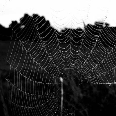Photograph - The Web by Adam Graser