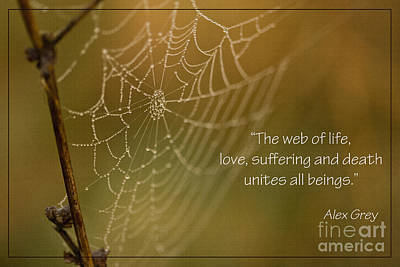 Photograph - The Web Of Life by Liz Alderdice