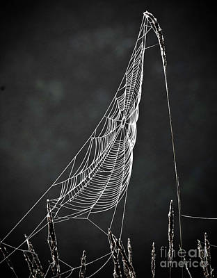 Photograph - The Web by Tom Cameron