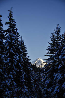 Snow Covered Trees Photograph - The Wedge Through The Trees by Pelo Blanco Photo