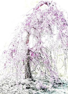 Photograph - The Weeping Cherry Tree by Angela Davies
