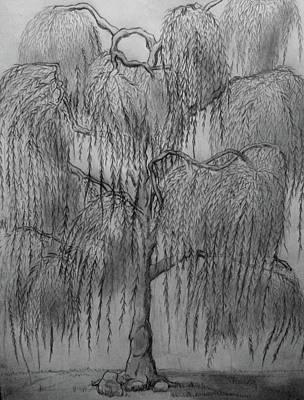 Weeping Drawing - The Weeping Of The Willow by Kyle Hale