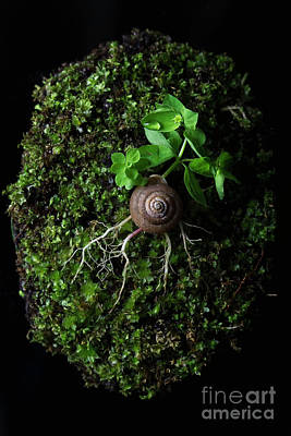 Thought Wild Photograph - The Weird Spring by Masako Metz