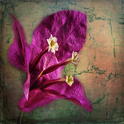 Photograph - The Well Dressed Bougainvillea by Bellesouth Studio