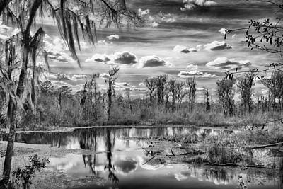 Photograph - The Wetlands by Howard Salmon