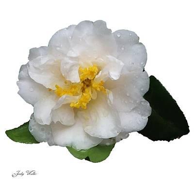The White Flower Art Print by Judy  Waller