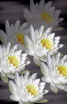 Photograph - The White Garden by Rosalie Scanlon
