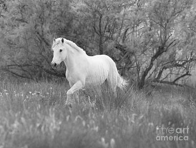 The White Horse In The Forest Art Print by Carol Walker