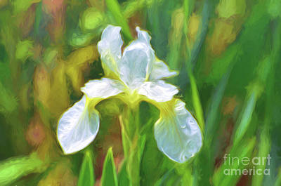 Photograph - The White Iris by Kerri Farley