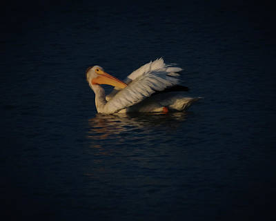 Digital Art - The White Pelican 2 by Ernie Echols