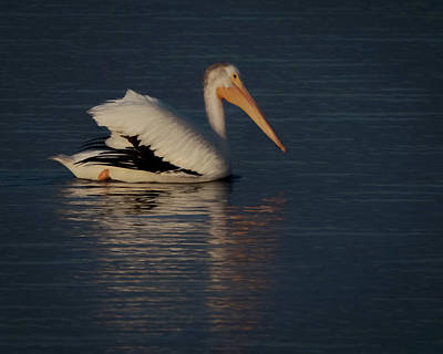 Digital Art - The White Pelican 3 by Ernie Echols