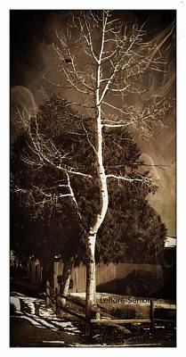 Digital Art - The White Tree by Lenore Senior