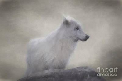 Wolf Photograph - The White Wolf. by Robert Brown