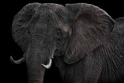 Animals Photos - the wild one Tilda by Joachim G Pinkawa
