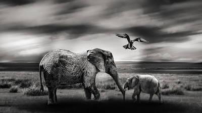Photograph - The Wild by Christine Sponchia