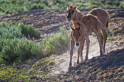 Red Dun Horse Photograph - The Wild Foals by Belinda Greb