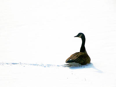 Photograph - The Wild Goose Once More by Guy Ricketts