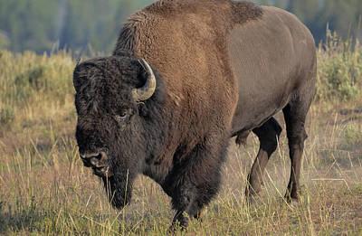 Photograph - The Wild by Rae Ann  M Garrett
