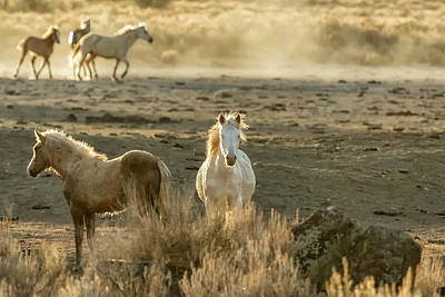Photograph - The Wild Spirit by Belinda Greb