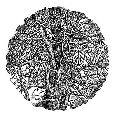 The Wild Trees Art Print