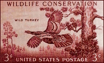 Meleagris Painting - The Wild Turkey Stamp by Lanjee Chee