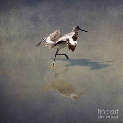Light Photograph - The Willet 2 By Darrell Hutto by J Darrell Hutto