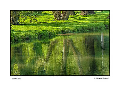 Photograph - The Willow by R Thomas Berner