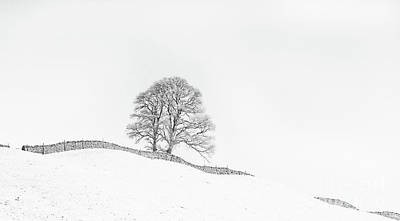 Infra-red Photograph - The Winding Wall by Janet Burdon