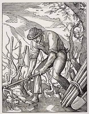Grape Vines Drawing - The Wine Grower. 19th Century by Vintage Design Pics