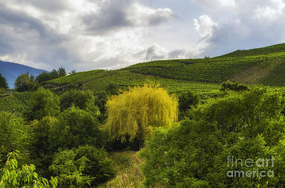 the wineyards of Loc Art Print by Michelle Meenawong