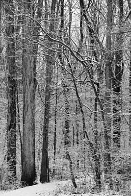 Photograph - The Winter Forest by Dan Sproul