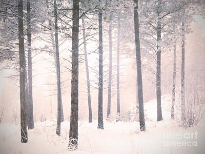 Photograph - The Winter Forest by Tara Turner