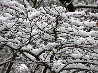 Photograph - The Winter Has Arrived by Valerie Ornstein