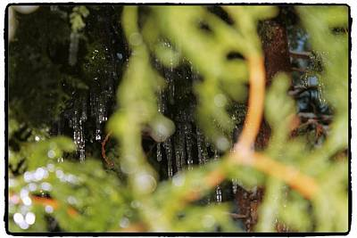 Photograph - The Winter Hides Beyond The Green by Mario MJ Perron