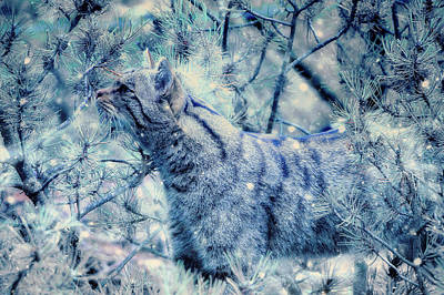 Photograph - The Winter Hunt by Ractapopulous