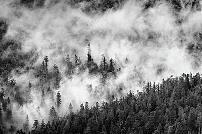 Photograph - The Winter Mists Cling by Greg Nyquist