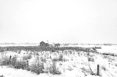 Photograph - The Winter Of Our Discontent 4 Bw by Steve Harrington