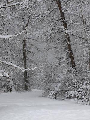 Photograph - The Winter Path by DeeLon Merritt