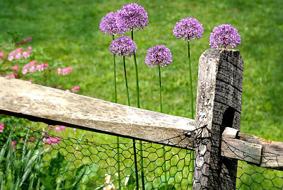 The Wired Fence Art Print