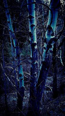 Painting - The Witches Aspen Grove by Jennifer Lake
