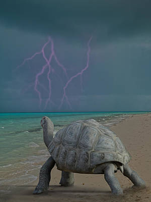 Turtle Digital Art - The Wonders Of Mother Nature by Betsy Knapp