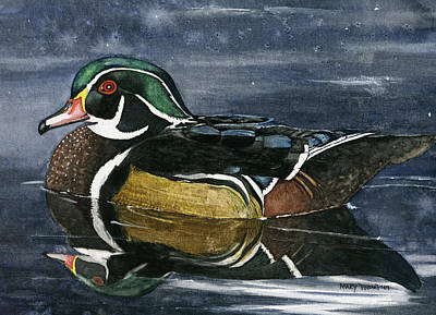 Wood Duck Painting - The Wood Duck by Mary Tuomi