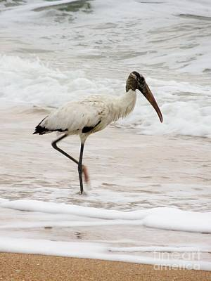 Photograph - The Wood Stork A Florida Shore Bird by Tim Townsend