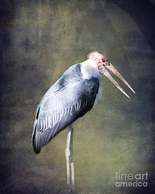 Stork Photograph - The Wood Stork By Darrell Hutto by J Darrell Hutto