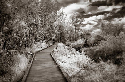 Surreal Infrared Sepia Nature Photograph - The Wooden Path by James Barber