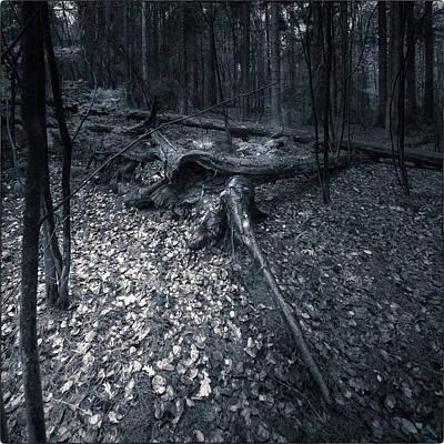 The Woodlands  Art Print