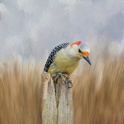 The Woodpecker Art Print