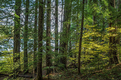 Photograph - The Woods Around Clear Lake by Belinda Greb