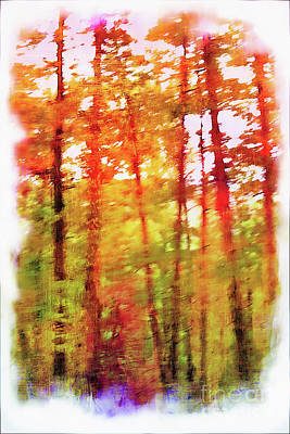 Photograph - The Woods In Autumn by Judi Bagwell