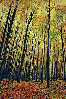 Art Print featuring the photograph The Woods In The North by Michelle Calkins